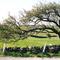 Strange Tree near Sligo