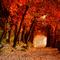 túnel d'arbres