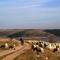 pastor con ovejas, embalse de Linares del Arroyo, PRCSG10, 2007.