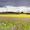 Summer Storm and flower Panorama