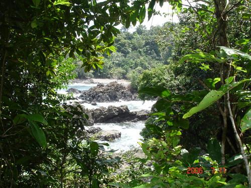 Bosque Humedo Tropical Y Mar El Valle Choco Colombia